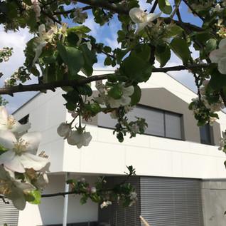 Planung Wohnhaus mit Einliegerwohnung: MPL4