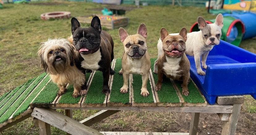 Private Hire 5 Dogs