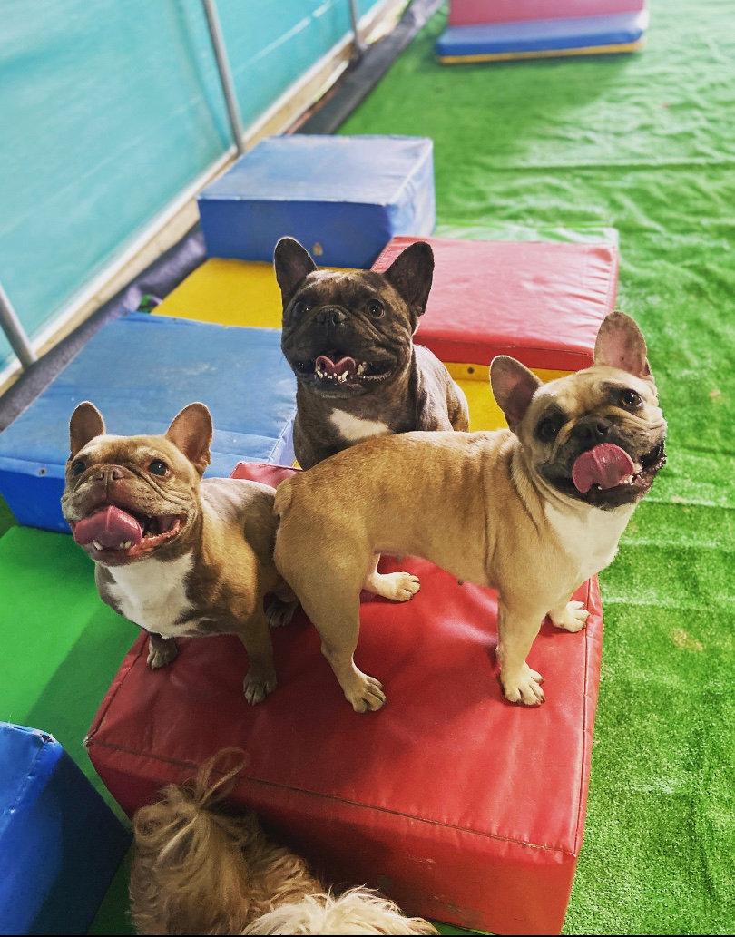 Private Hire 3 Dogs