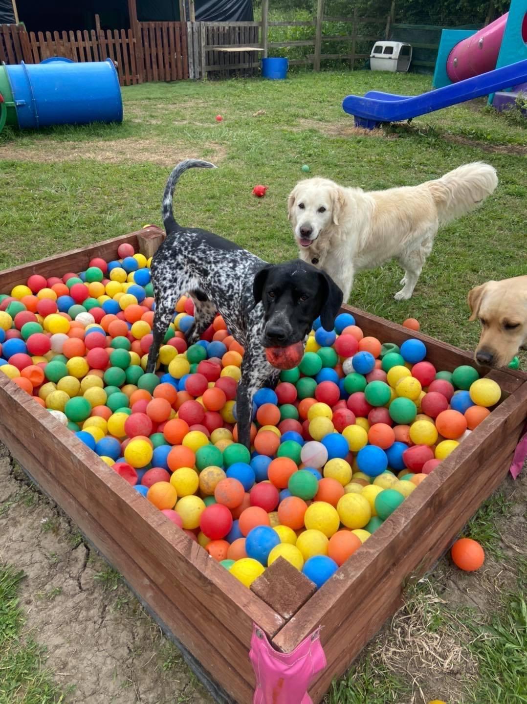 Private Hire 4 Dogs