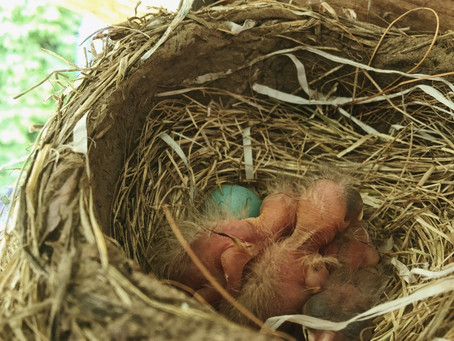 Baby Birds, A Post for Mothers