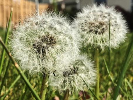 Wishes Among Weeds