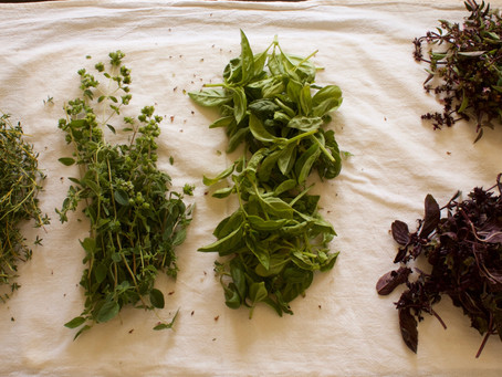 Preserving Herbs 3 Ways (Without Drying)