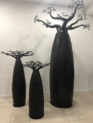 Baobab grande taille