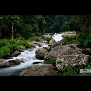 #nature #river #stream #water #green #ra