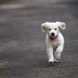 #dogsofinstagram #robin #goldenretriever
