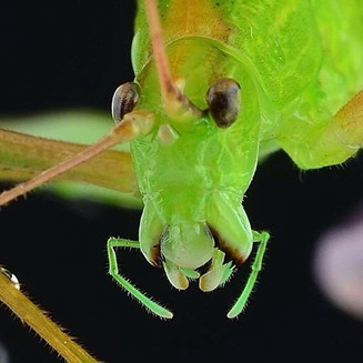 #ramprasanth #macro #insect #small #worl