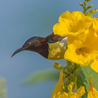 #nikon #nature #bird #beautiful #sun #ra