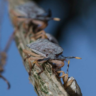 #nikon #nature #bug #shell #shellbug #ma