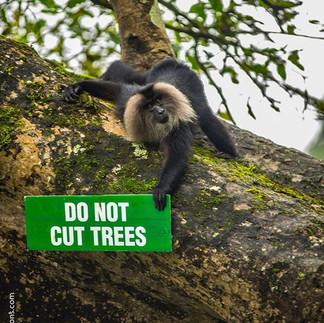 #flashmediacreations #wildlife #ramprasa