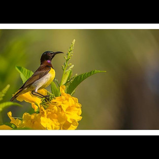#ramprasanth #sun #bird #nature #photogr