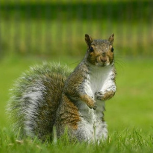 #ramprasanth #nikon #nature #cute #uk #p