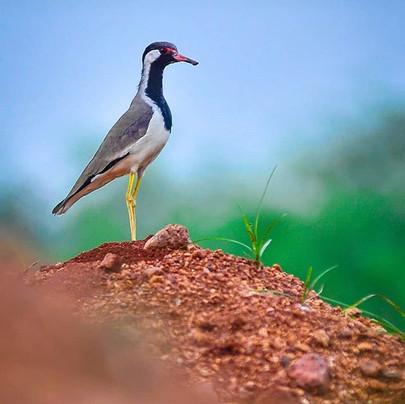 #birdphotography #coimbatore #ramprasant