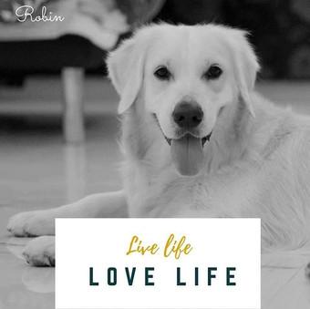 #dogsofinstagtam #flashmediacreations #c