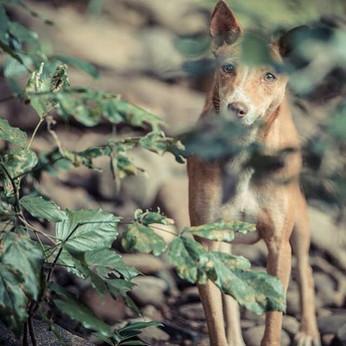 #flashmediacreations #dog #eyes #love