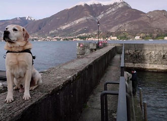 Dogs-on-Netflix-1-620x327.jpg