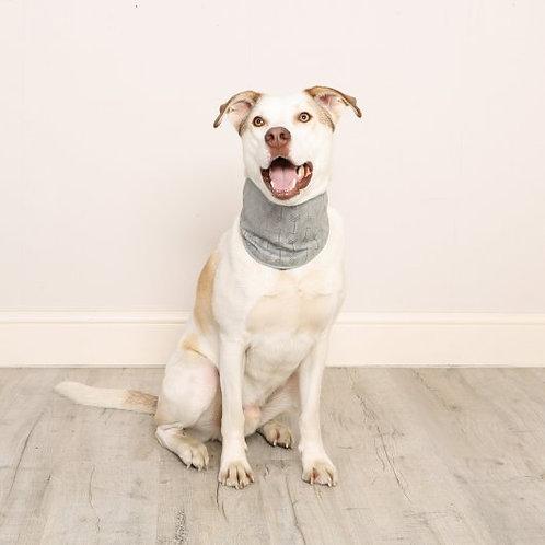 Dog Cooling Bandana
