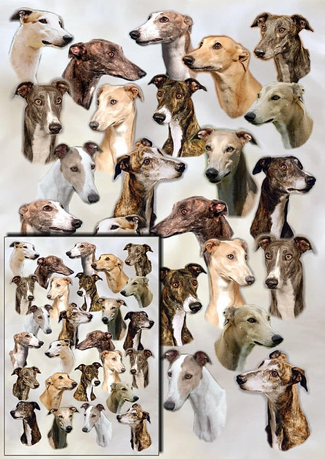 Greyhound Wrapping Paper