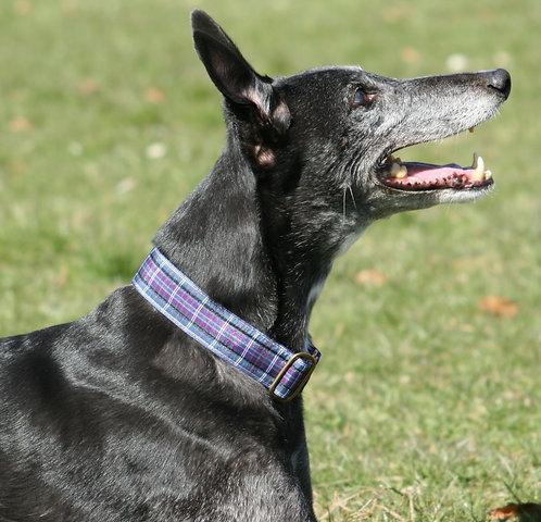 Purple Tartan Kitsch Martingale Collar
