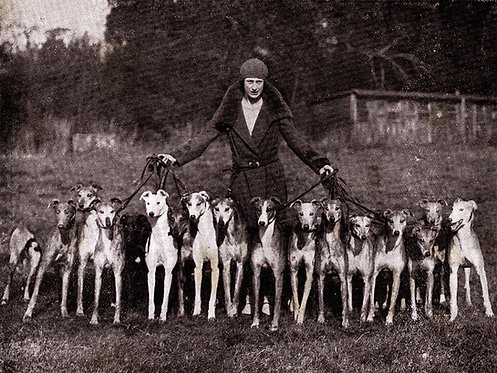 Blank Greyhound Greeting Cards