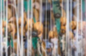 Créateur et fabriquant d'abat-jour sur mesure et de suspensiosn, Marie Fillon conçoit l'ensemble des ses modèles d'abat-jours dans son atelier à Lezay, Deux-Sèvres (79). Création d'abat jour pour luminaires, abat-jour contrecollés et abat-jour couture