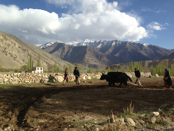 Nimmu Village 1