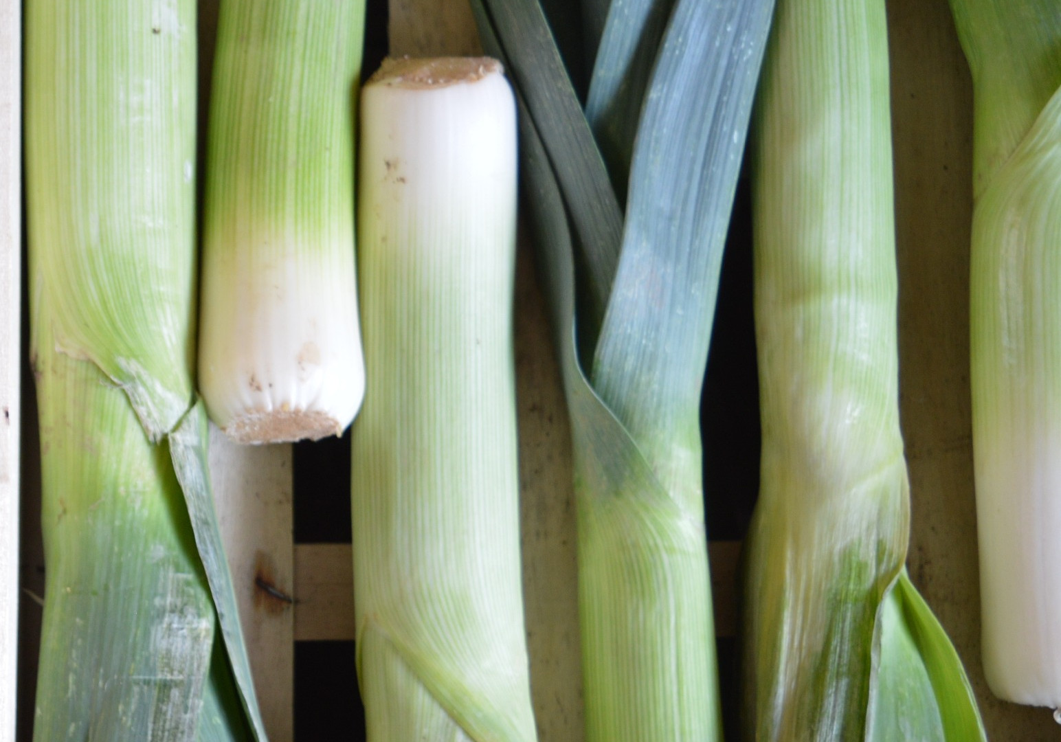 Winter - Leek