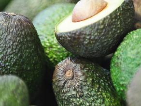 Avocado Season Is Here