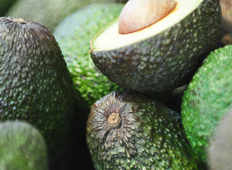 Avocado Season Is Here
