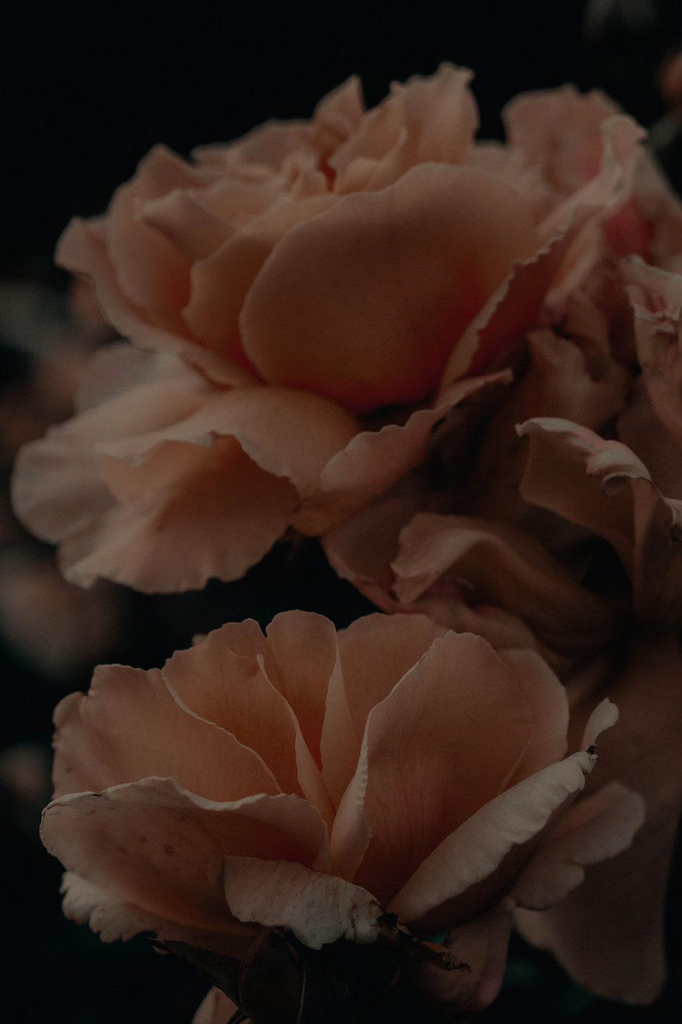 arriere-plan fleurs
