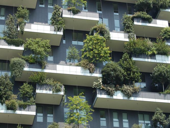 Closeup view of green terraces