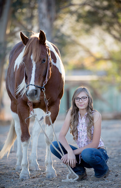 Equine photography portrait