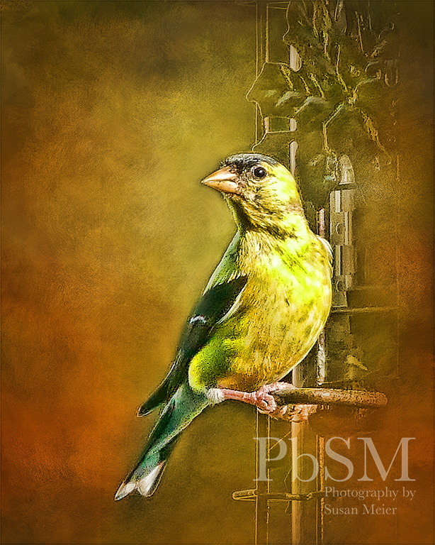 Gold Finch Art