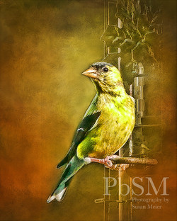 Gold Finch Art