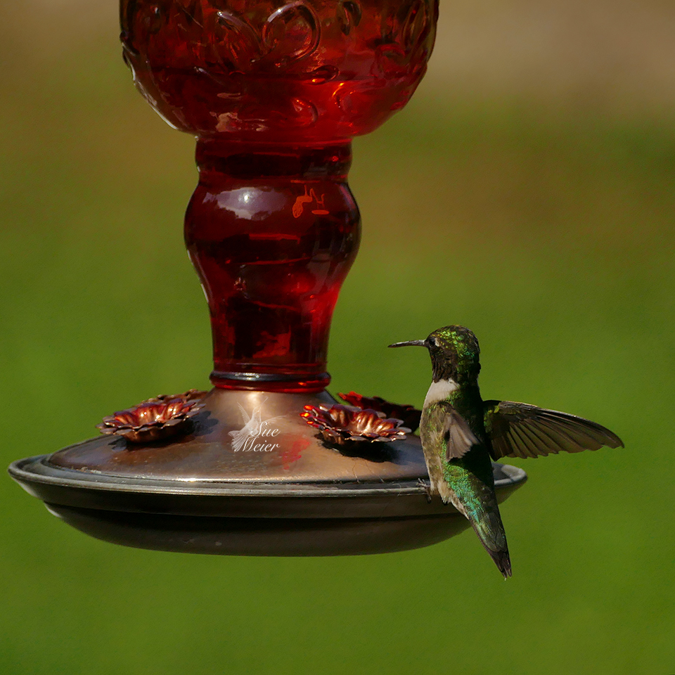 July312019Hummers - 4 copy