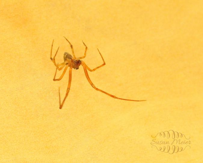 Spider 13