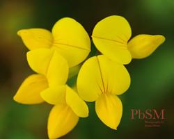 Yellow Lawn Flowers