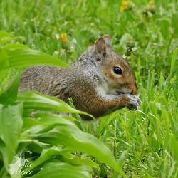 2019 Squirrel