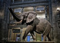 Natural History Museum, D.C.