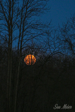 April 202 Pink Moon in morning