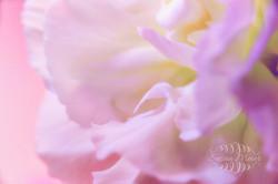 Flower Ruffle
