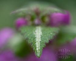 Stripe on Leaf