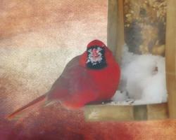 Jan 30th Cardinal