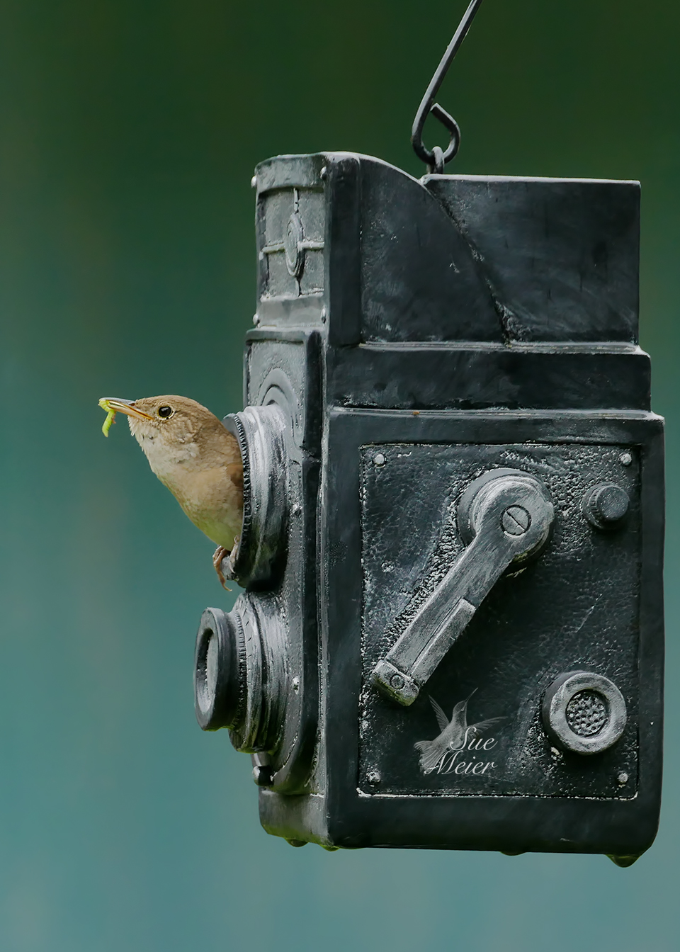 June 162019HouseWren - 1 copy