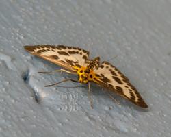 Moth in basement