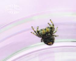 Jumper in Jar 24