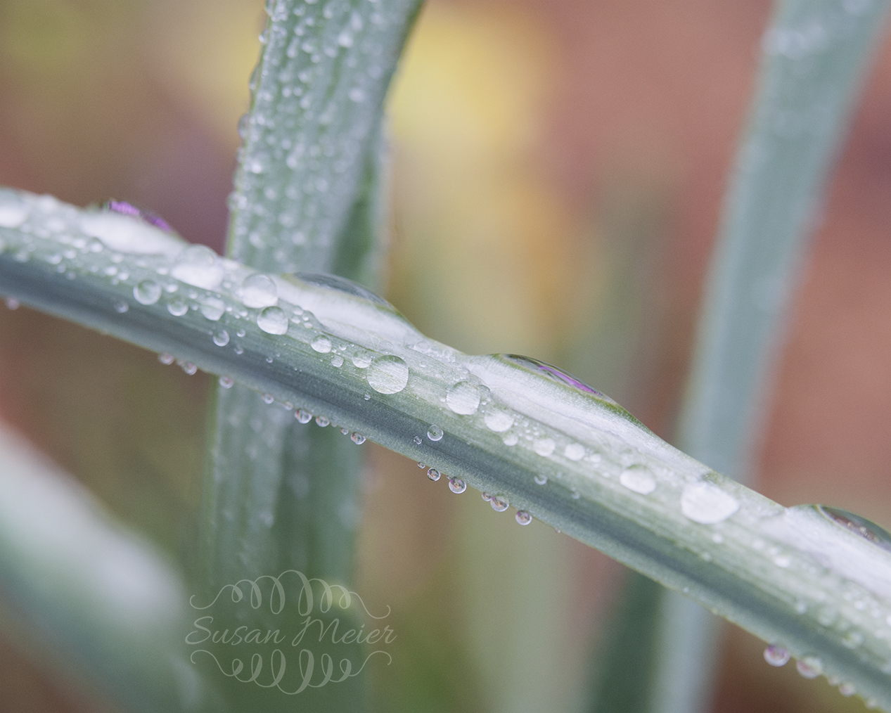 Soft Colors & Rain drops