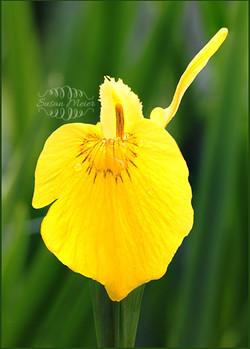 Glen Iris Inn flower