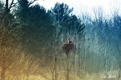 Iroquois Refuse - Eagle Nest