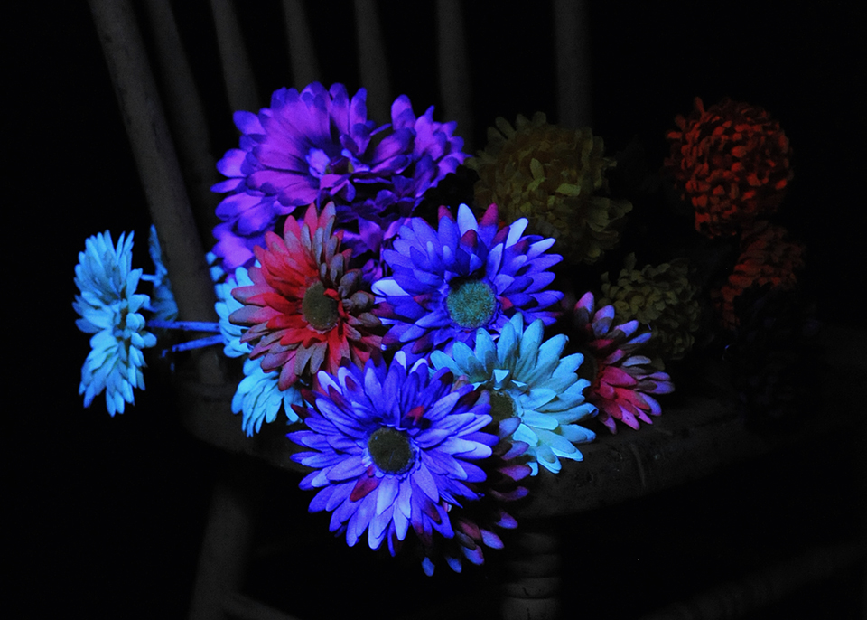 UV Light flowers